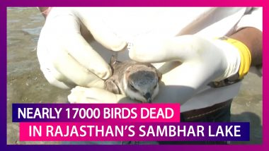 Around 17000 Birds Dead In Rajasthan's Sambhar Lake